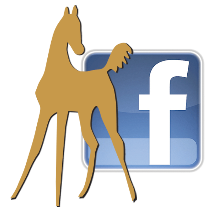 WarmbloodStallionsNA on Facebook